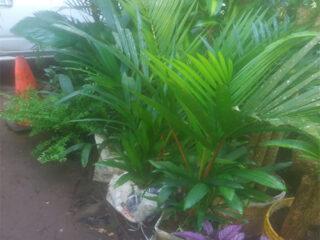 Plantas para facebbok shop